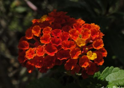 Red Orange Flower