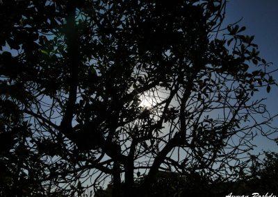 Shadowy Trees