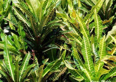 Green Yellow Plant