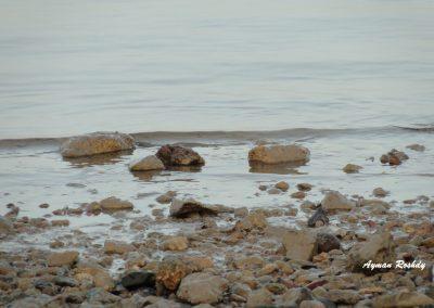Watery Rocks