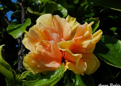 Orange Pinky Flower