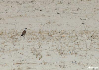 Lonely Sea Bird
