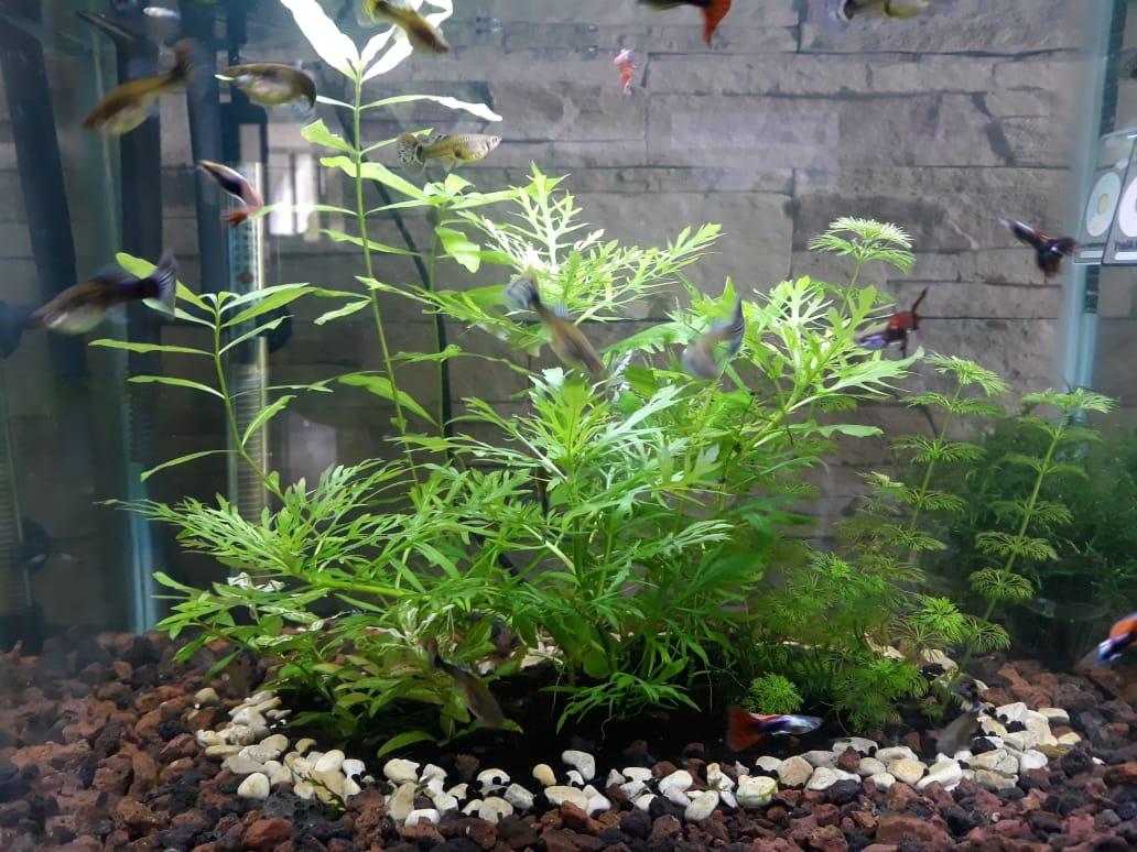 Medium Aquarium