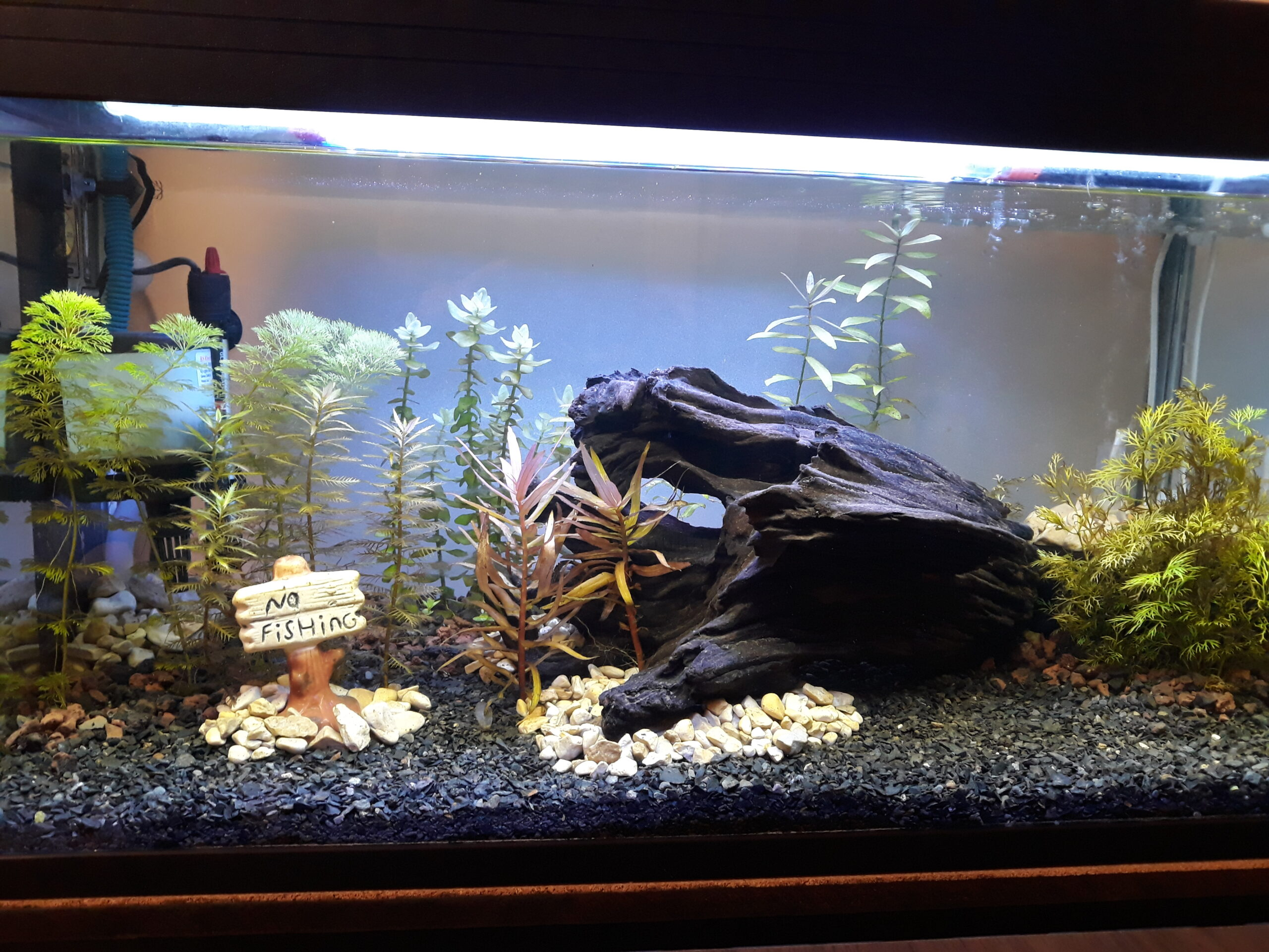 Another very early aquascape